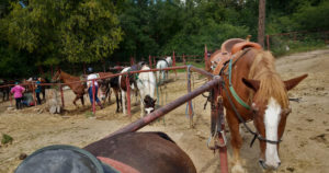 Becoming an Outdoors Woman (BOW) in Arizona September Camp Day 1 Horsemanship
