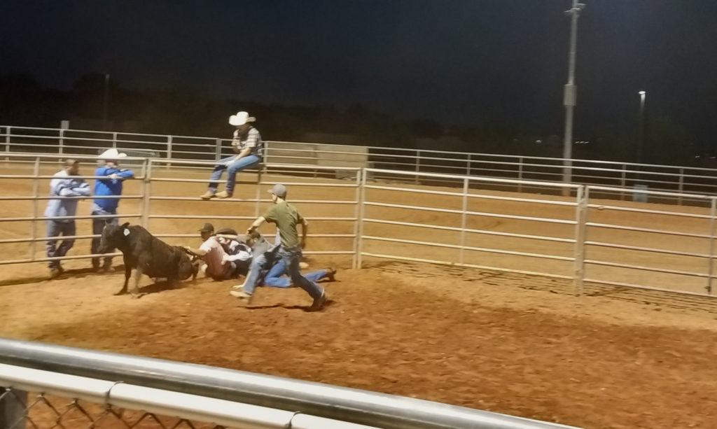 Queen Creek Fall Festival 2018 Activities cattle chasing