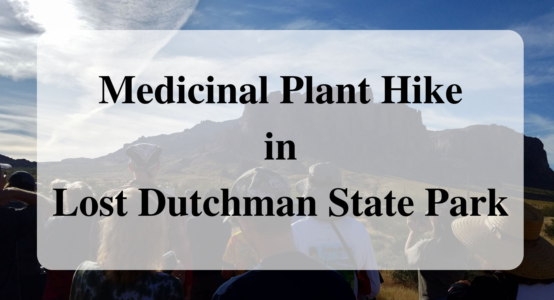 Medicinal Plant Hike in Lost Dutchman State Park