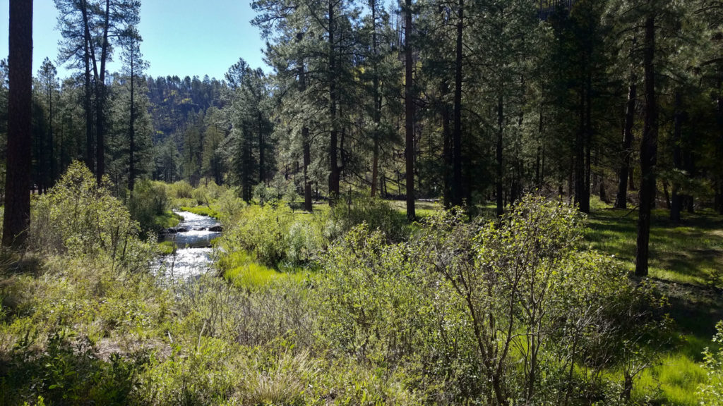Black River in Arizona Forever Sabbatical  2