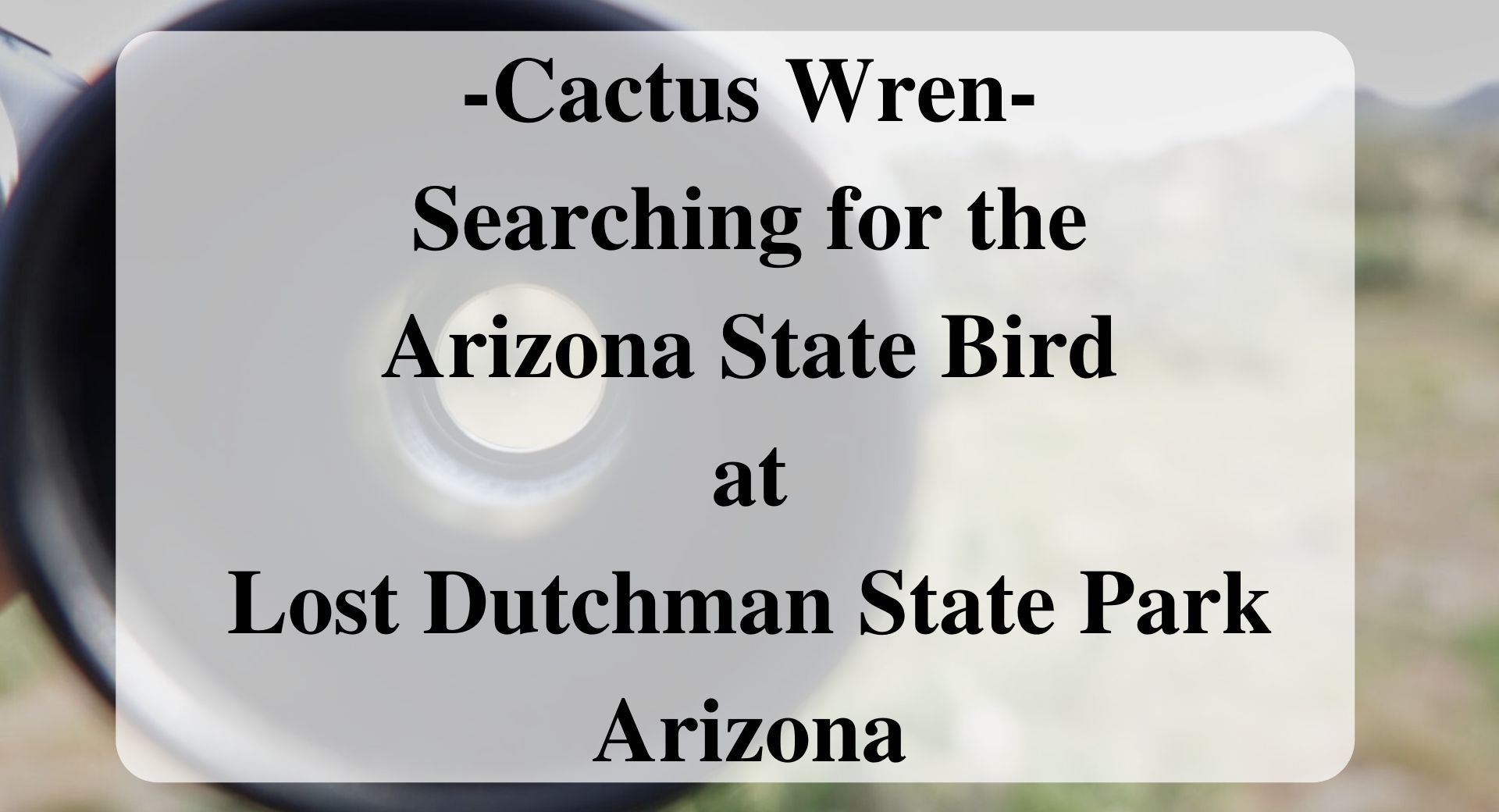 -Cactus Wren- Searching for the Arizona State Bird at Lost Dutchman State Park Arizona Forever Sabbatical
