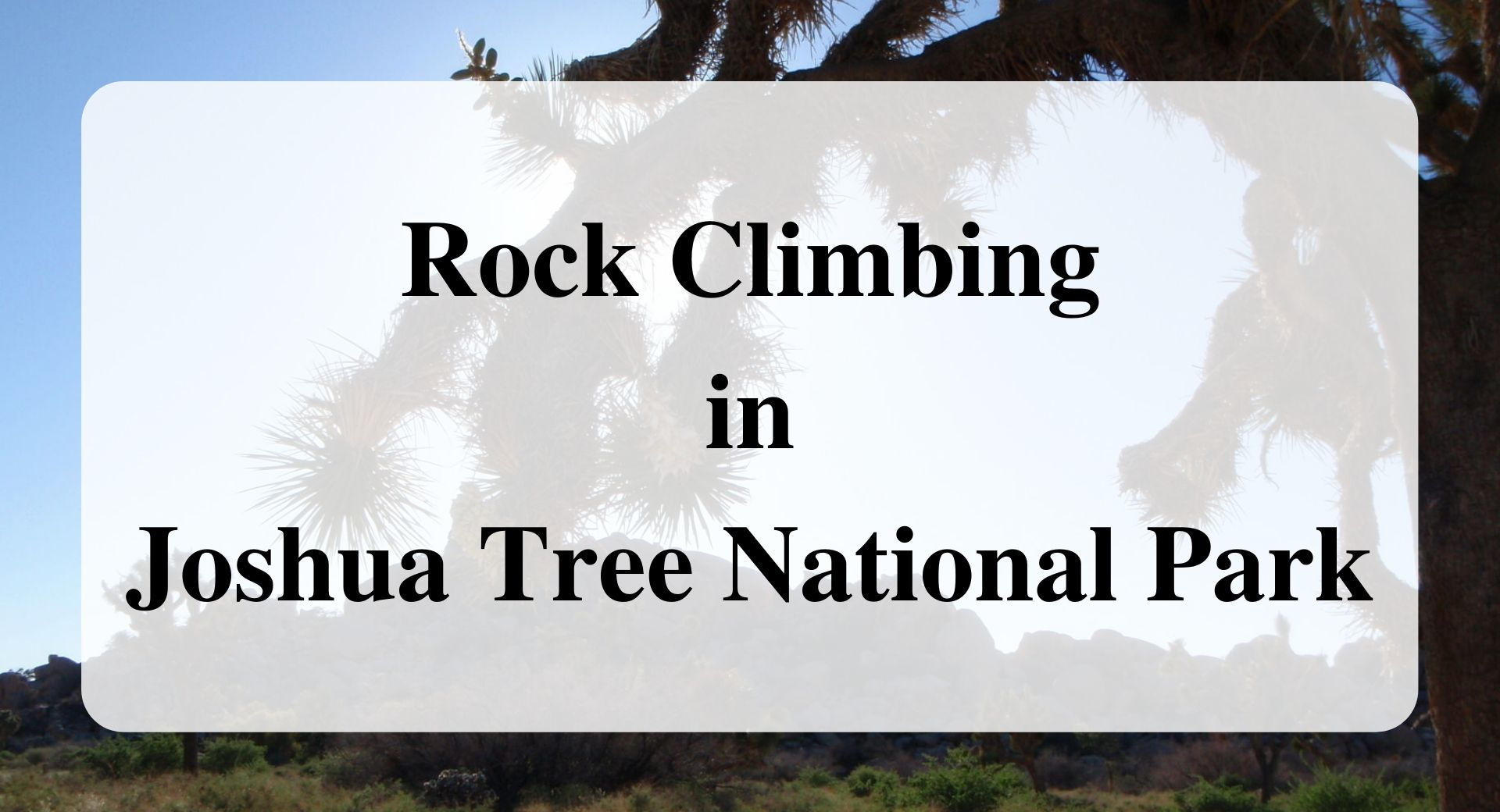 Rock Climbing in Joshua Tree National Park main