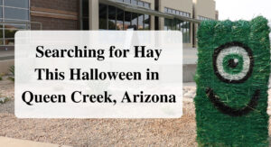 Searching for Hay This Halloween in Queen Creek, Arizona Forever sabbatical