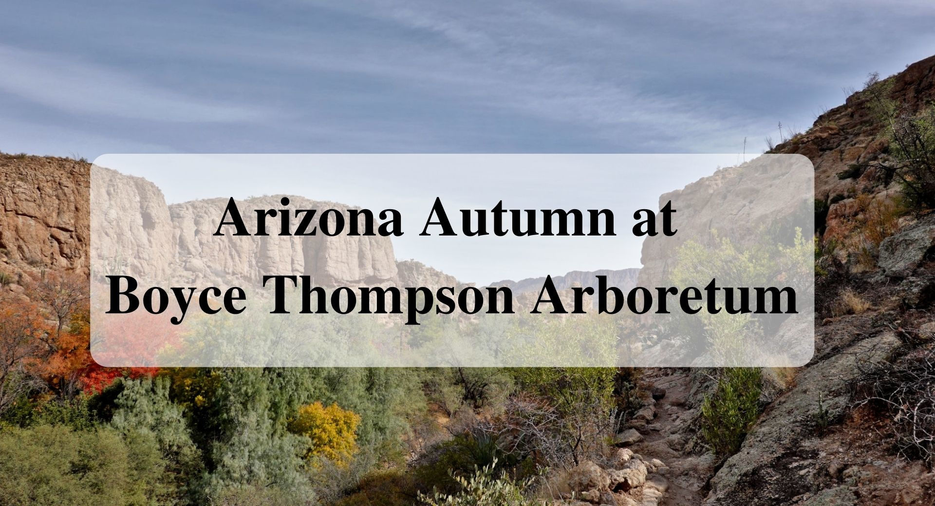 Arizona Autumn at Boyce Thompson Arboretum Forever Sabbatical