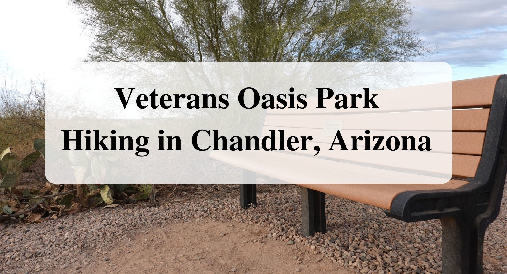 Veterans Oasis Park Hiking in Chandler Arizona