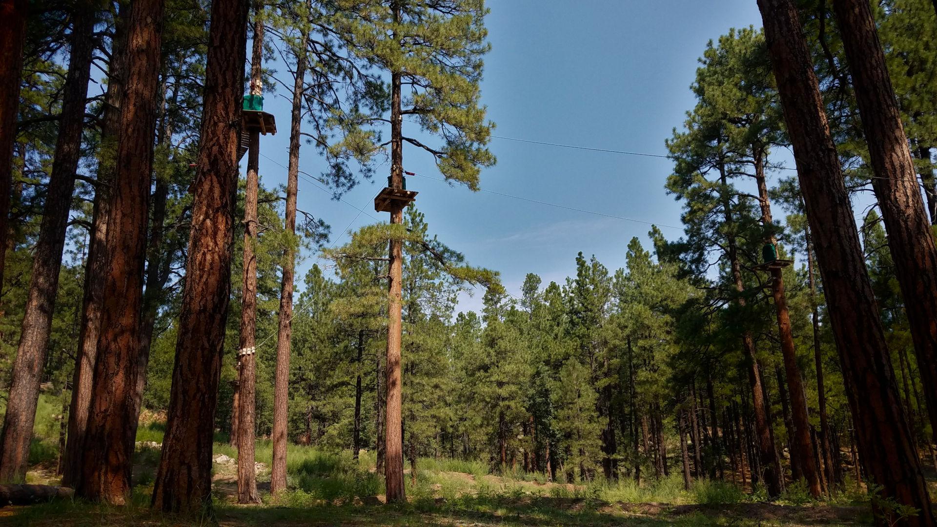 5 Tips for Arizona Zip Line Adventure tree stands