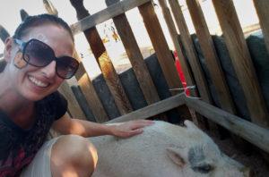 Queen Creek Fall Festival 2018 Activities Petting area