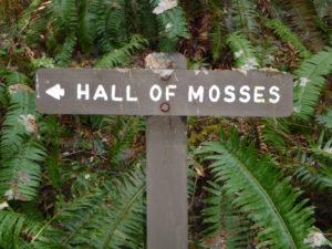 hike HoH rainforest Olympic National Park, Forever Sabbatical