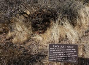 Animals, forever sabbatical, Native Plant Trail